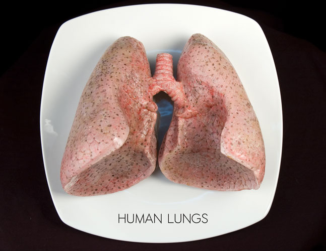 HumanLungs